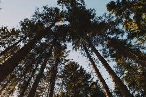 Hout van bossen uit de Verenigde Staten wordt in Nederland gebruikt om bio-energie te produceren
