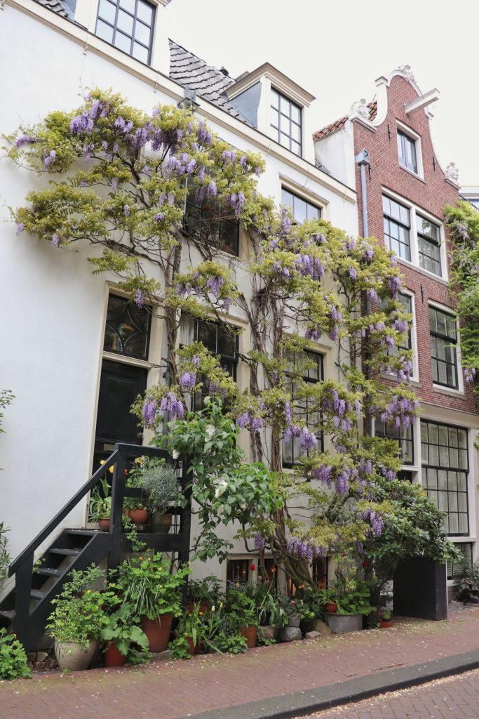 Groen om je huis helpt enorm om duurzamer te wonen en leven